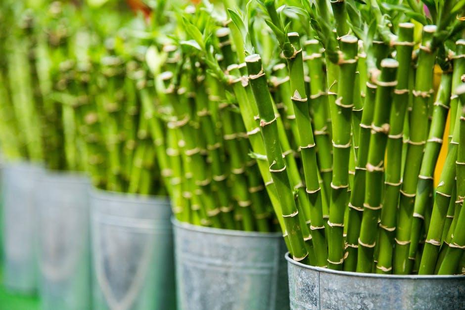 چرا از محصولات بامبو استفاده می کنیم؟
